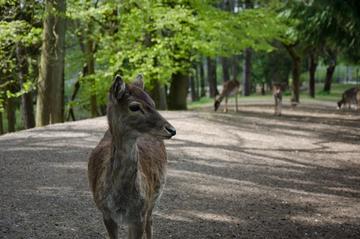 Wildpark Schwarzach